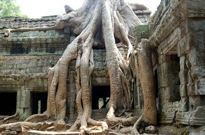 Ta_prohm_creepy_crawly
